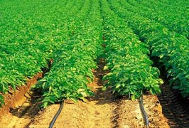 Organic Crop Control